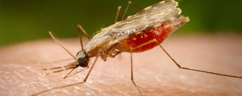 Red Cross didn't cure Malaria with MMS | Cogito